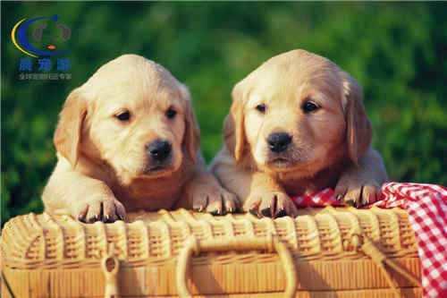 你没有注意的小常识——常见的狗狗有哪些种类?