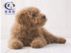 养狗小常识—适合家养的小型