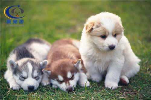人为什么要有宠物呢 养宠物对人有什么好处