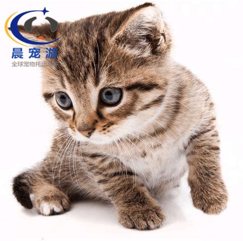 猫类小常识—猫不能吃的东西有哪些