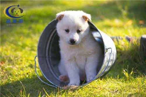 长沙宠物托运公司哪家好 优秀的宠物托运企业