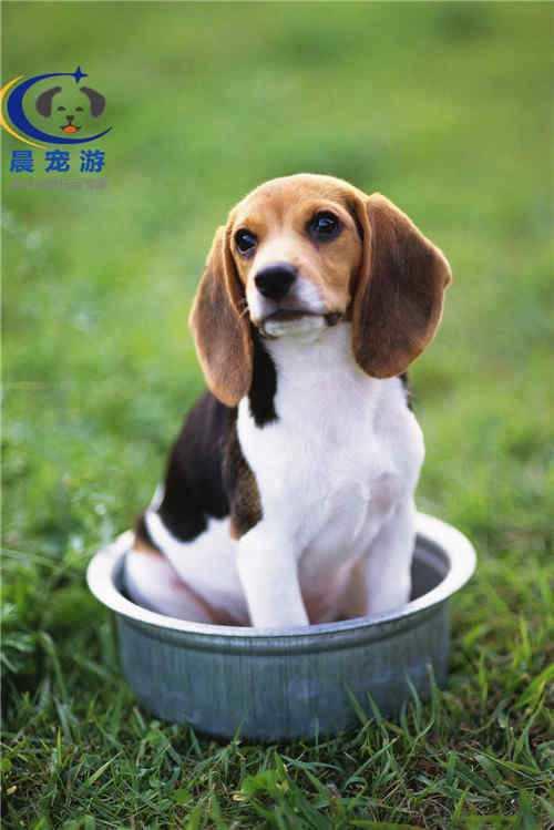 杭州宠物托运哪家好 杭州托运价格多少
