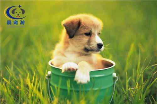 晨宠游宠物运输,保证宠物安全到家