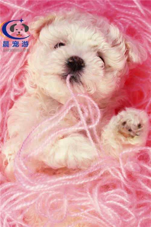 宠物托运前的:动物免疫操作规程