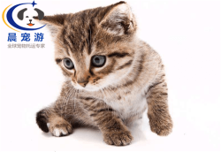 上海到深圳-宠物托运