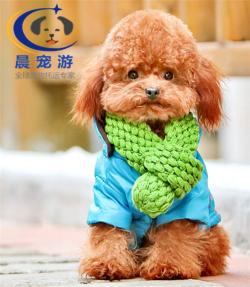广州到上海-托运宠物找晨宠游
