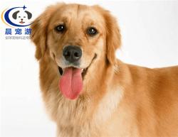 上海到天津-宠物托运