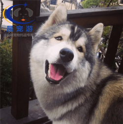 广州到深圳-托运宠物找晨宠游