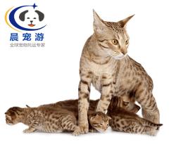猫猫奥西猫托运