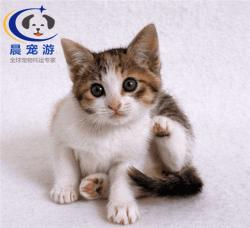 猫猫波米拉猫托运
