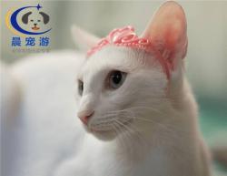 <b>猫猫东方猫托运</b>