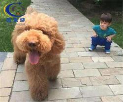 北京到重庆-宠物空运