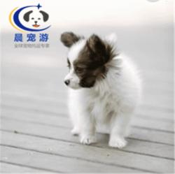 北京到武汉-宠物空运