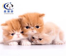 北京到厦门-宠物空运