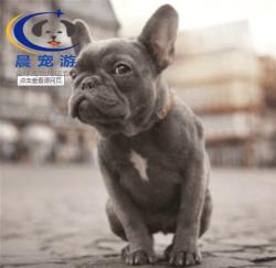 上海到厦门-宠物托运