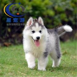 北京到南京-宠物空运