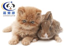 上海到合肥-宠物托运