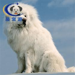上海到南京-宠物托运