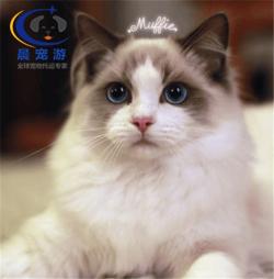 北京到杭州-宠物空运