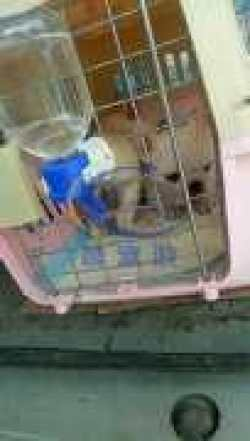 <b>晨宠游—为宠物托运的每一次出行保驾护航</b>
