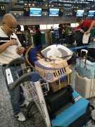 飞机托运宠物安全吗  宠物空运