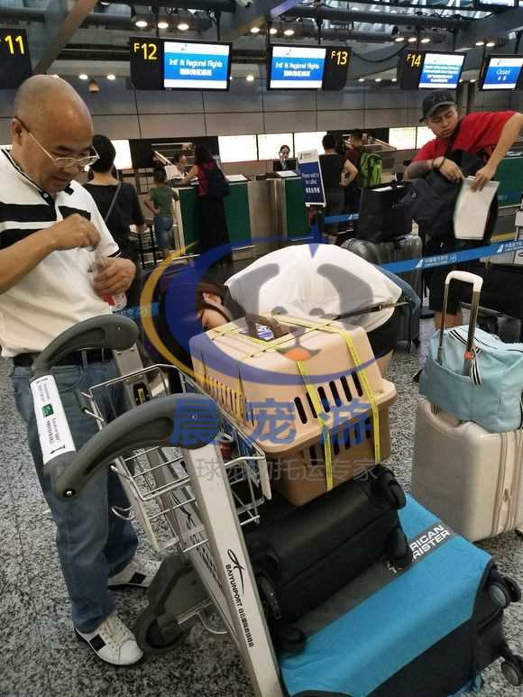 飞机托运宠物安全吗  宠物空运流程【最详细的】