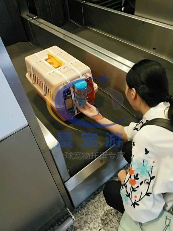 客户通过收到的联系方式和地点的短信,携带收货人本人有效原件在柜台进行办理手续对宠物进行提取。