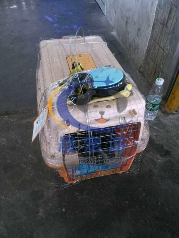 宠物要怎么托运 宠物怎么托运【火车 飞机】