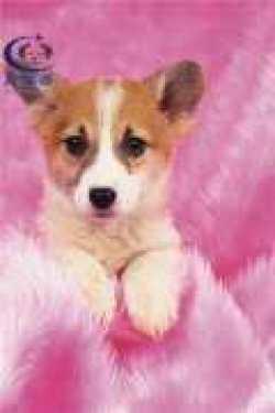 <b>长沙宠物托运公司哪家好 优秀的宠物托运企业</b>