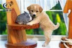 晨宠游宠物运输 保证宠物安全到家