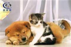 宠物托运计费的方式 宠物托运