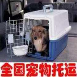 宠物空运办理方式 飞机托运宠物优点缺点