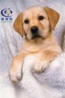 宠物托运切忌:这样遛狗是一种伤害